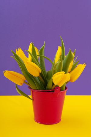 Yellow tulips in orange bucket on purple Stock Photo - 6170798