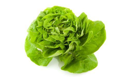 Fresh wet butterhead lettuce crop isolated over white