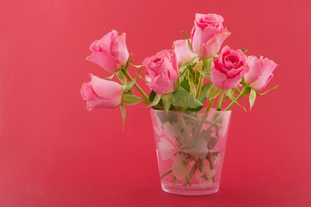 Pink roses in vase on red background photo