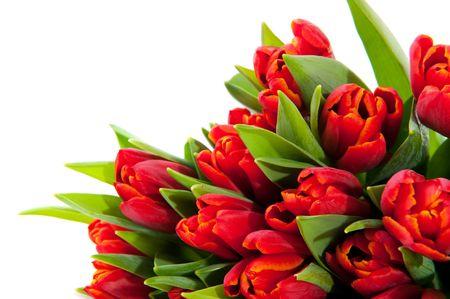 arreglo floral: Tulipanes rojos en un rincón aislado sobre blanco