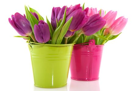 Pink tulips in bucket for spring with checkered ribbon