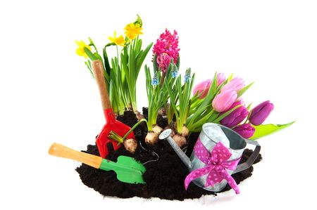 gardening with flower bulbs and tools in spring photo