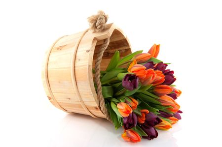 mixed flower bouquet: colorful tulips in orange and dark and wooden bucket