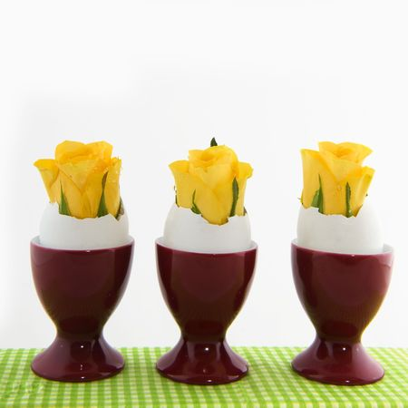 Yellow easter flowers in egg cups isolated over white photo