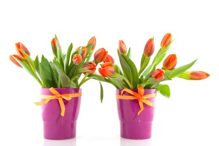 Two bouquets of orange tulips in purple vases with ribbons photo