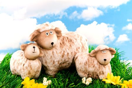 White wool sheep with two little lambs in spring photo