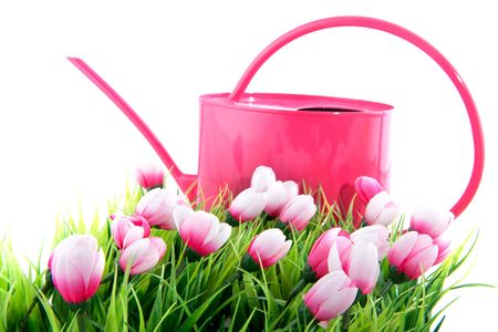 Watering can and flowers in pink for spring photo