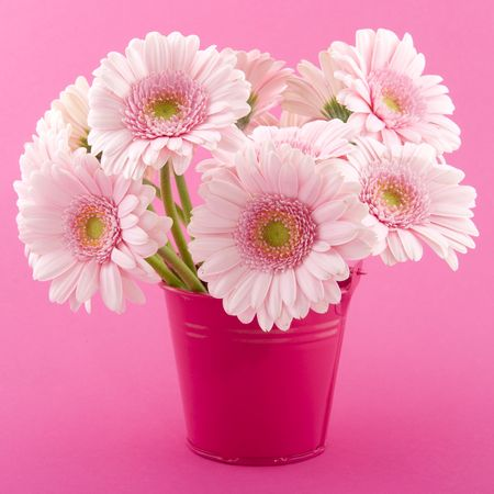 Bouquet of pink Gerber in bucket on colorful background Stock Photo - 6509261