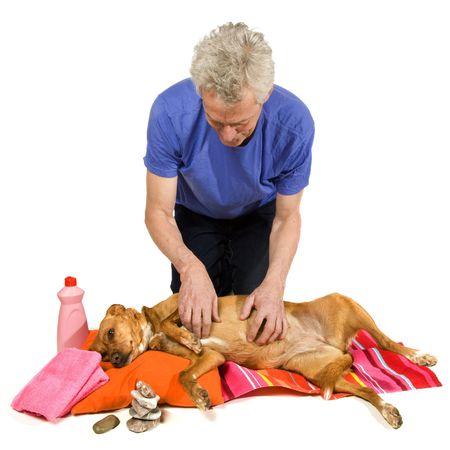 massage oil: Moment Zen et traitement de SPA par le propri�taire de chien  Banque d'images