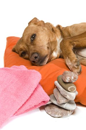 dog rock: Zen moment and Spa treatment for dog Stock Photo