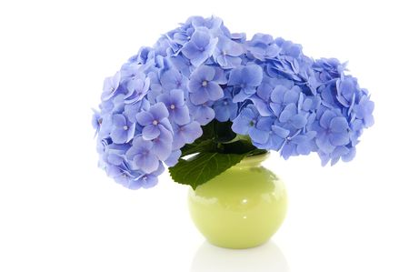 hydrangea flower: Blue Hydrangea flowers in green vase isolated over white Stock Photo