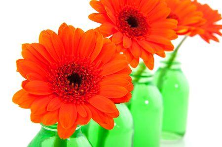 Orange Gerber in green little glass vases photo