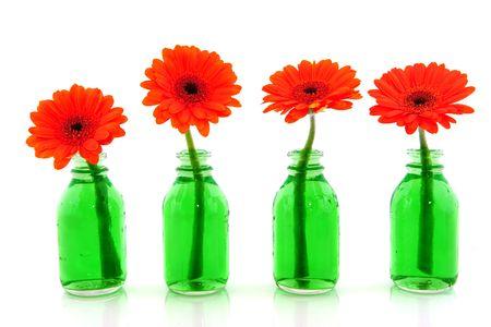 Row with orange Gerber in green bottles photo