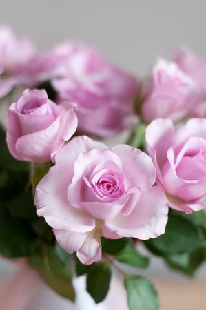 Pink roses in interior on gray wall Stock Photo - 6647418