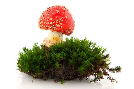 toadstool in green moss isolated over white photo