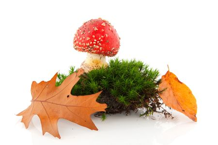 toadstool or mushroom in moss with autumn leaves photo