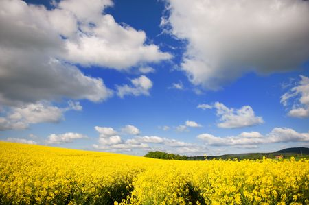 cole: Landscape with yellow cole seed and clouds