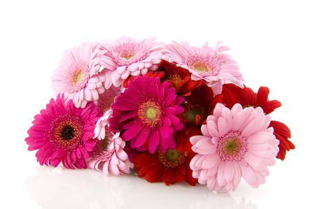 Colorful bouquet Gerber in pink and purple on white background photo