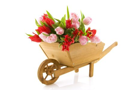 Wheelbarrow with bunch of tulips in red and pink photo