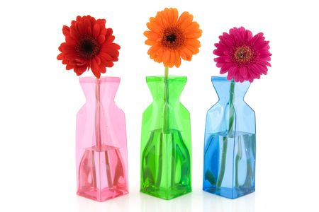 colorful Gerber in modern glass vases on white background photo