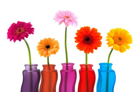 Colorful Gerber flowers in glass modern vases photo