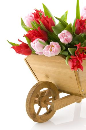 wooden,wheelbarrow,bouquet,tulips,flowers,bunch,arrangement,nature,garden,tools,wheel,barrow,vertical,white,background,gardening photo