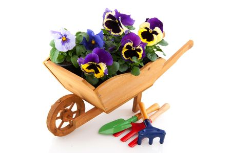 wooden wheelbarrow with work tools and plants Stock Photo