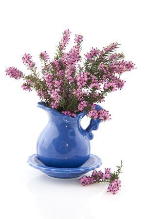 erica: Purple Erica heath flowers in blue vase