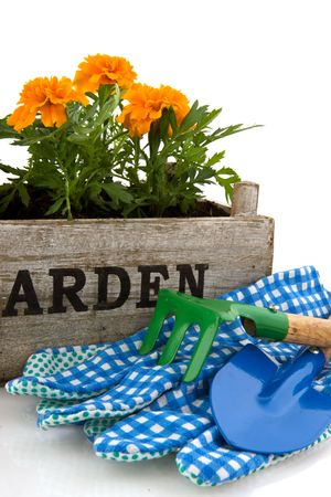 Crate with French Marigolds and work tools for garden Stock Photo - 6816128
