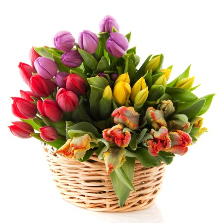 Basket with colorful bouquets of tulips on white background photo