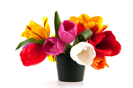 Colorful Dutch tulips in many different colors isolated over white photo