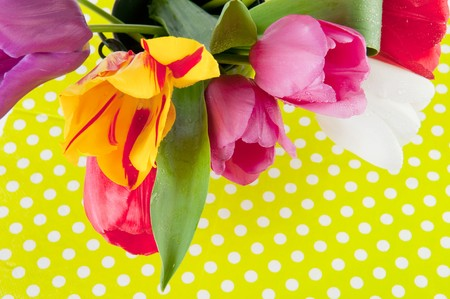 Colorful tulips on dotted green background for birthday Stock Photo - 6950995