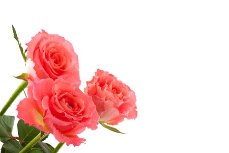 close up of a card with pink roses and copy space photo
