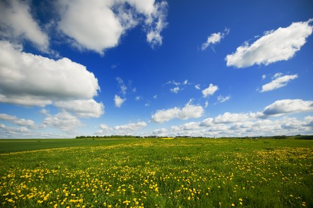 Grass fields with Dandelions and cloudy sky Stock Photo - 7088517
