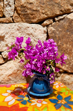 Purple Bougainvillea in the summer in front of a nature wall photo