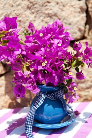 bougainvillea flowers: Purple Bougainvillea in the summer in front of a nature wall