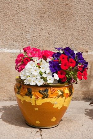 French flower pot with colorful Petunia flowers