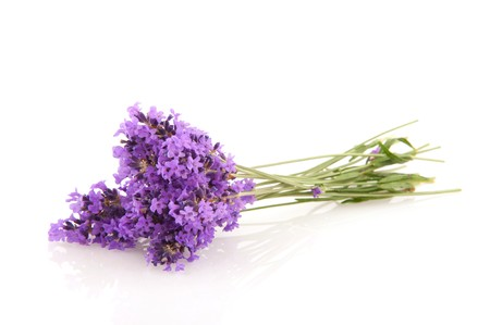 Bouquet of Lavender sprigs isolated over white Stock Photo - 7376605