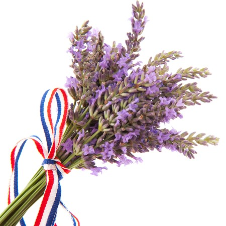 Bouquet purple Lavender flowers isolated over white photo