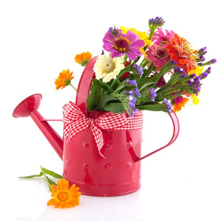 Colorful flowers in pink watering can isolated over white photo