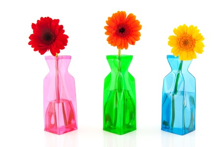 Colorful Gerber in modern glass vases isolated over white photo