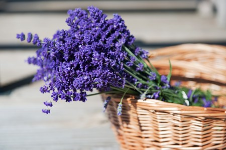Wicket cane basket with a bouquet of purple Lavender photo