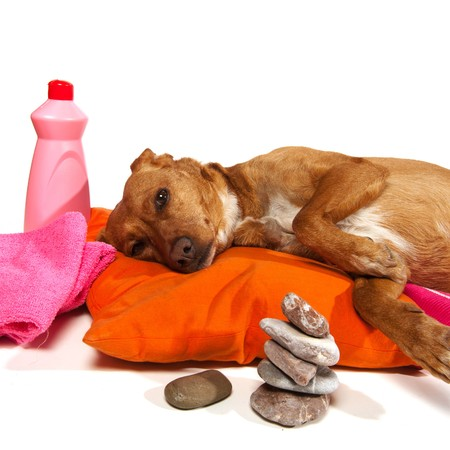 Zen moment and Spa treatment for dog Stock Photo