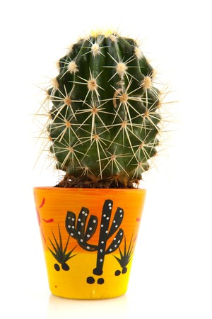 prickly flowers: Prickly cactus in decorated flower pot isolated over white