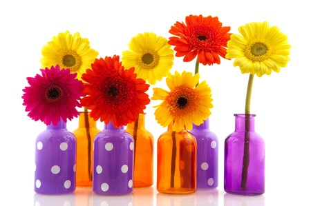 Multicolor Gerber in colorful glass vases isolated over white photo