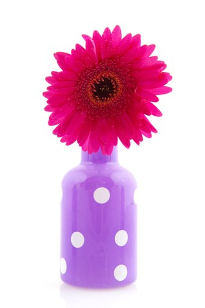 Cheerful purple vase with white dots and colorful red Gerber photo