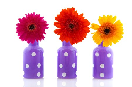 Cheerful Purple Vases With White Dots And Colorful Gerber Stock