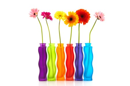 colorful single Gerber flowers in row modern glass vases photo