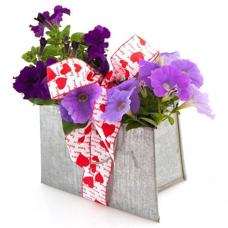 purple metal: Purple Petunia plants in metal garden ornament as a present