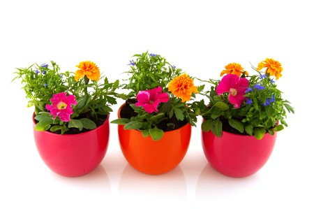 Garden flowers and plants in colorful pots isolated over white